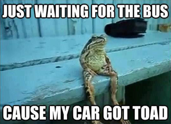 Pun of a toad