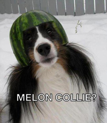 Pun of a collie