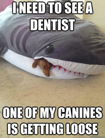 Need to see a dentist